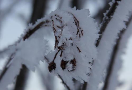 frozen_plant